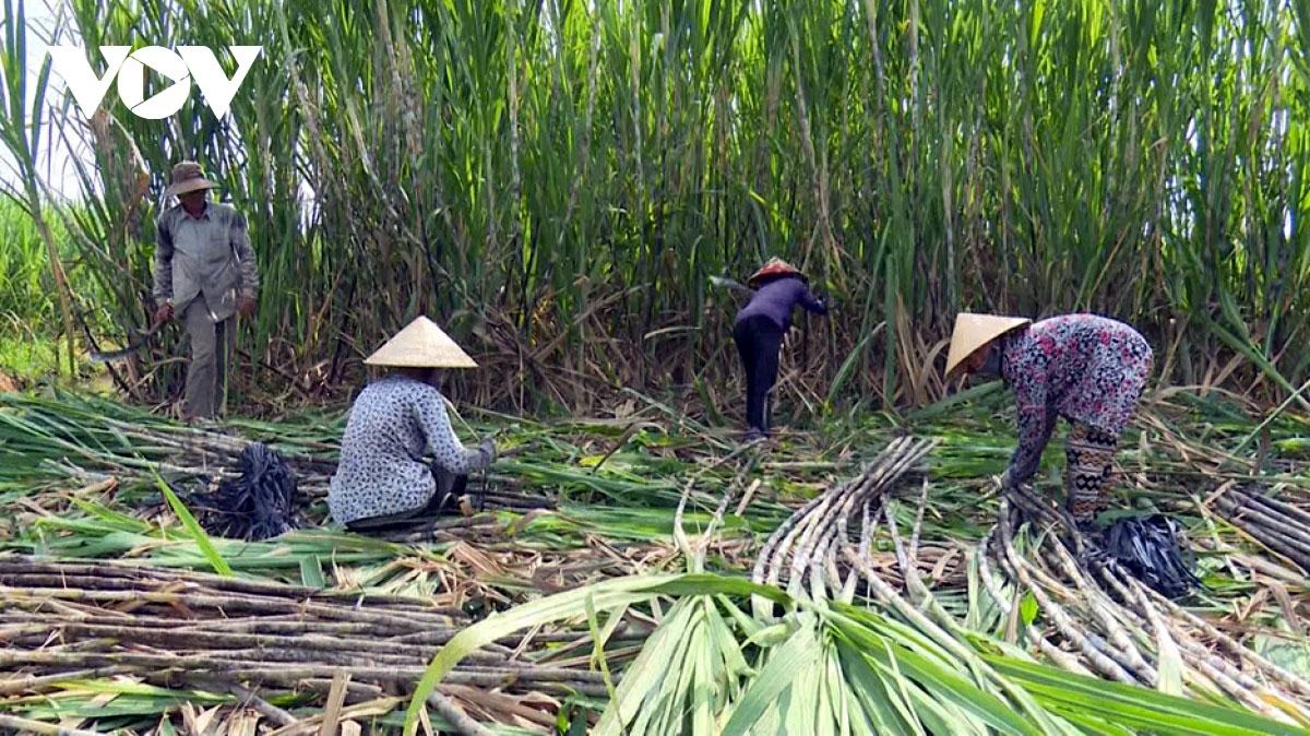 Ngành sản xuất đường mía trong nước thời gian qua đã chịu thiệt hại nặng nềdo đường nhập khẩu được trợ cấp và bán phá giá từ Thái Lan tăng mạnh.