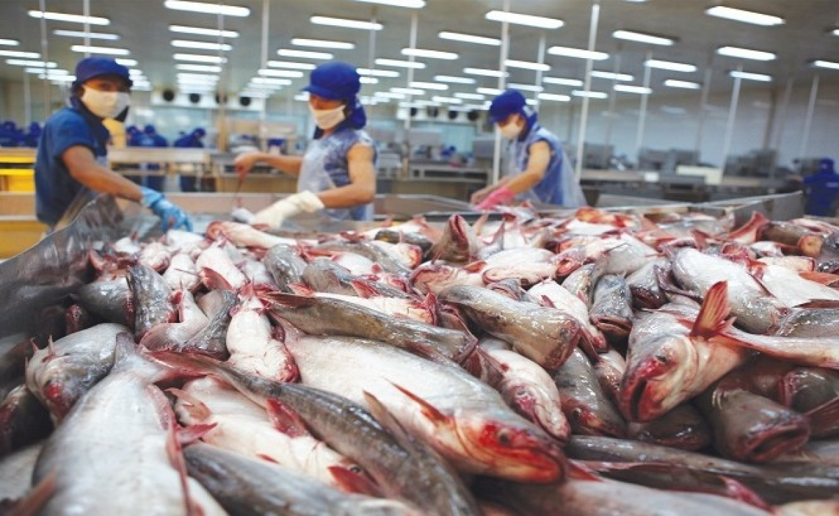 The US has continuously increased its pangasius imports from Vietnam. (Illustrative image)