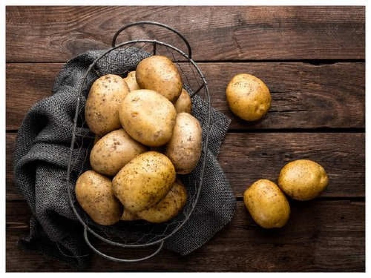Theo các chuyên gia, khoai tây có hàm lượng tinh bột cao rất thích hợp cho món luộc vì dễ nghiền sau khi luộc xong. Khoai tây có tinh bột trung bình như Yellow Finn và Yukon Gold có nhiều độ ẩm hơn và rất tốt để thêm vào súp và thịt hầm. Khoai tây ít tinh bột, thường được gọi là khoai tây sáp, rất thích hợp để làm salad và chế biến, vì chúng giữ hình dạng tốt hơn tất cả các loại khác khi luộc.Trong khi luộc khoai tây trong nồi, luôn luôn cho một lát chanh nhỏ vào để tránh thâm đen ở đáy và thành nồi./.