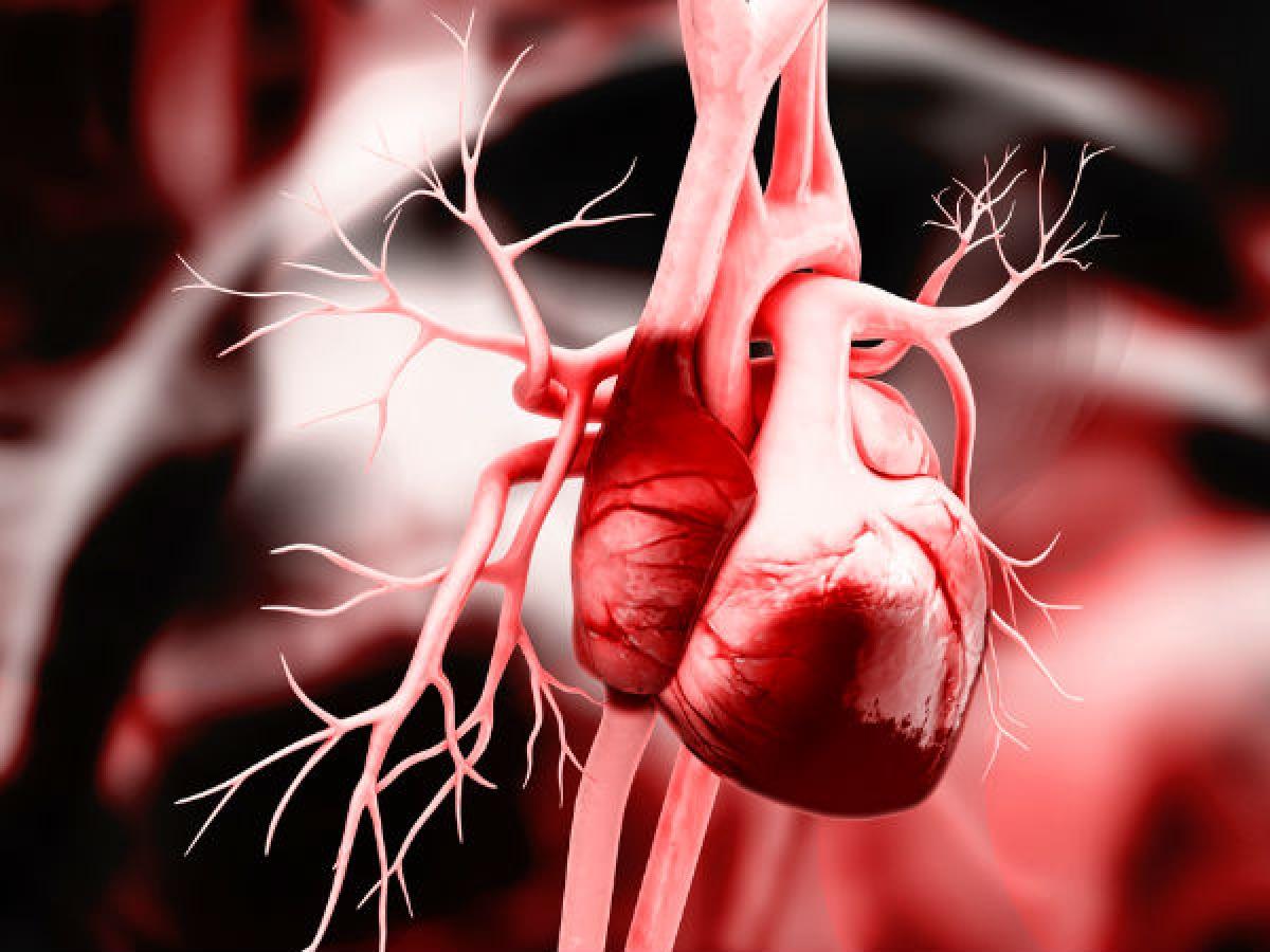Các bệnh tim mạch: Thuốc lá còn có thể gây tử vong qua các bệnh ảnh hưởng đến tim và các mạch máu. Hút thuốc lá làm tăng hàm lượng cholesterol trong cơ thể, khiến cholesterol và các chất béo tích tụ trong động mạch. Sự tích tụ này làm tắc động mạch và hình thành các cục máu đông, dẫn đến nguy cơ mắc các bệnh tim mạch.
