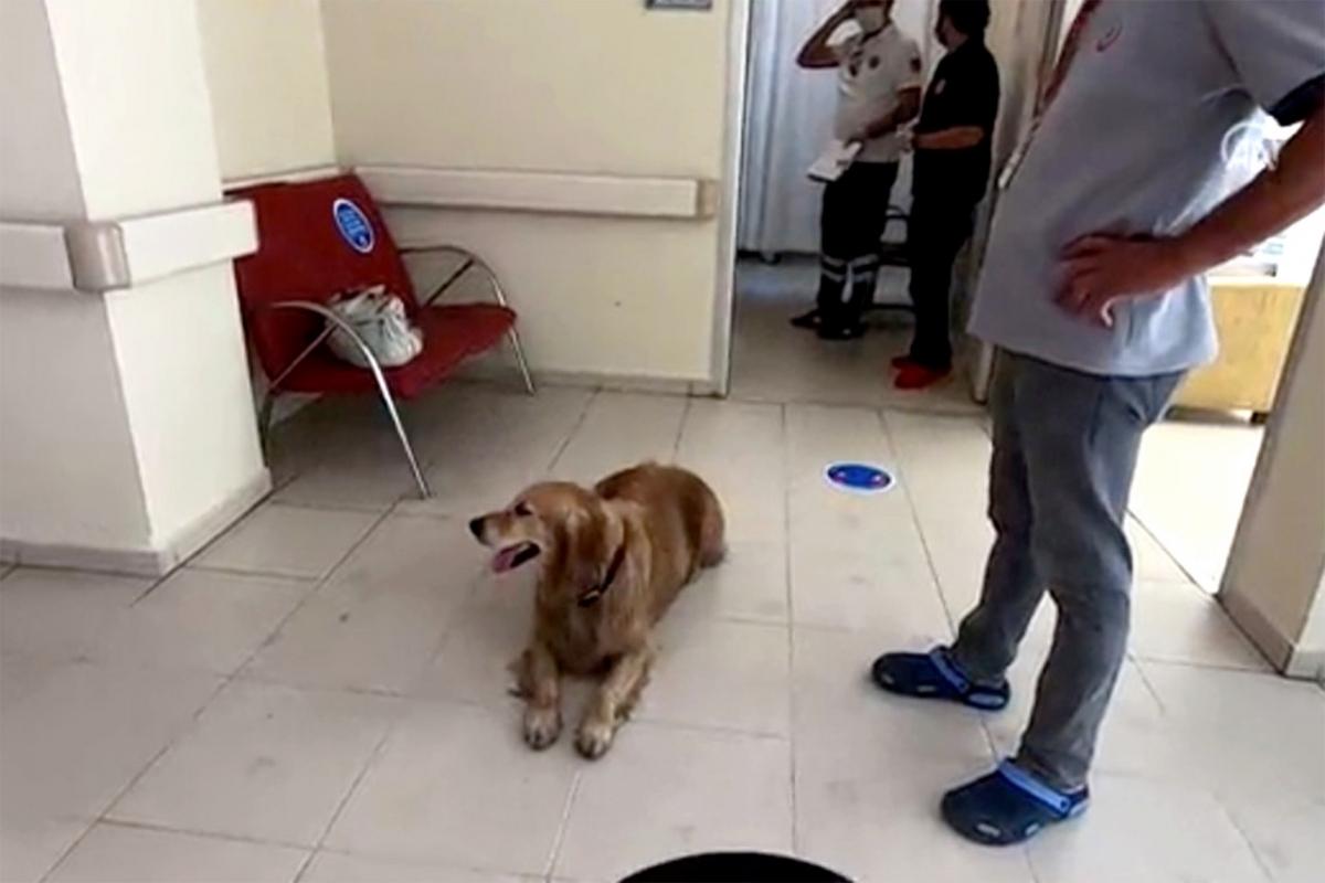 Chú chó nằm chờ chủ nhân ở sảnh bệnh viện. Ảnh: New York Post