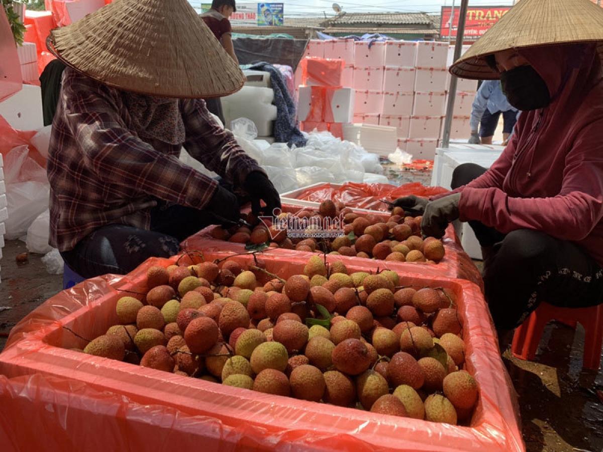 Vải thiều Bắc Giang xuất khẩu ồ ạt sang Trung Quốc (ảnh: BH)