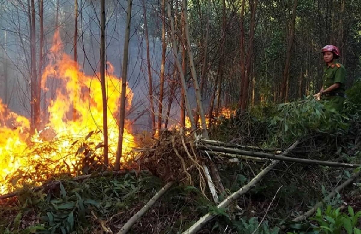 Cháy rừng luôn là nỗi lo thường trực.
