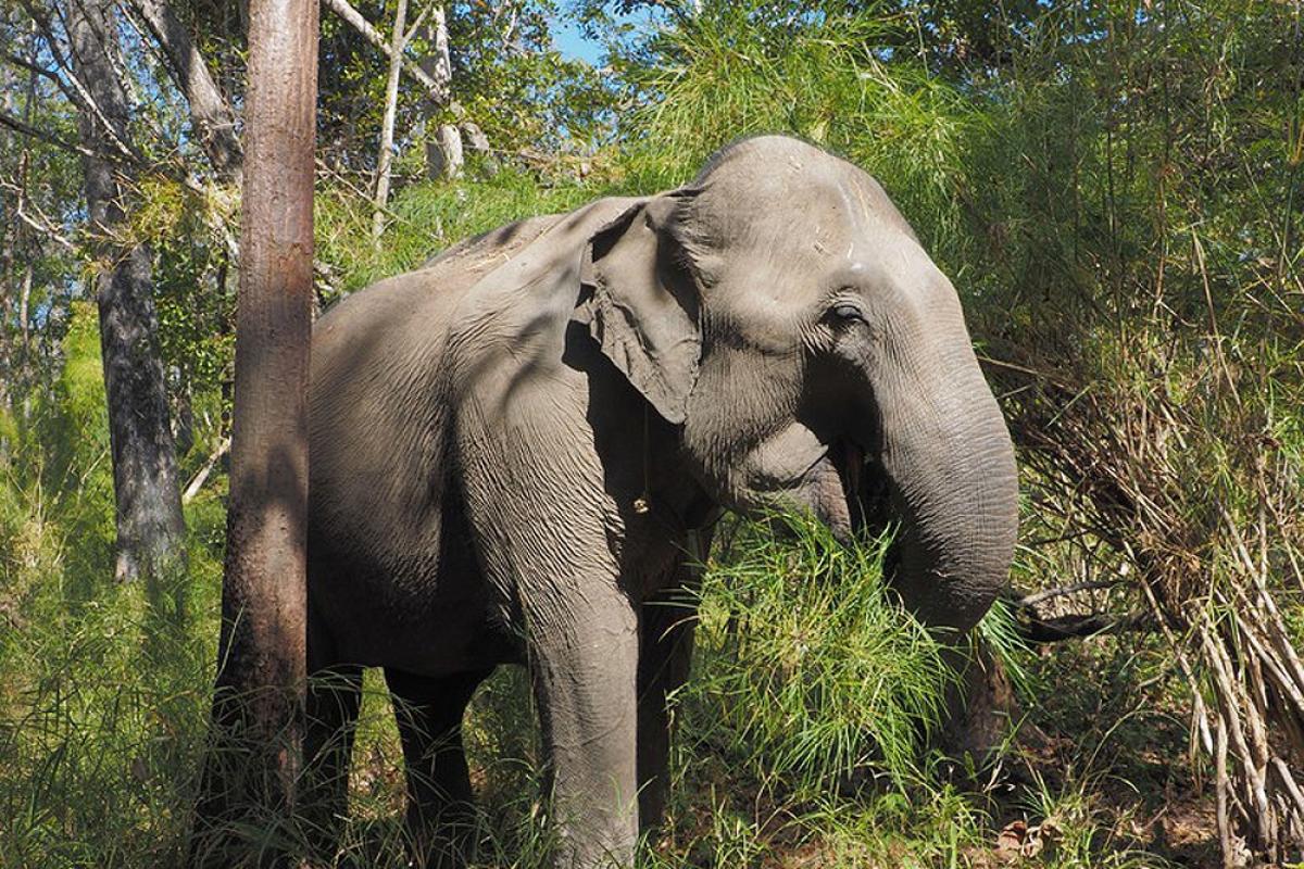 Vườn quốc gia Yok Don là tổ chức đầu tiên chấm dứt các hoạt động liên quan đến tour du lịch cưỡi voi và thay thế bằng các trải nghiệm thân thiện với voi (Ảnh: Stefan Liebhold / Alamy Stock Photo)