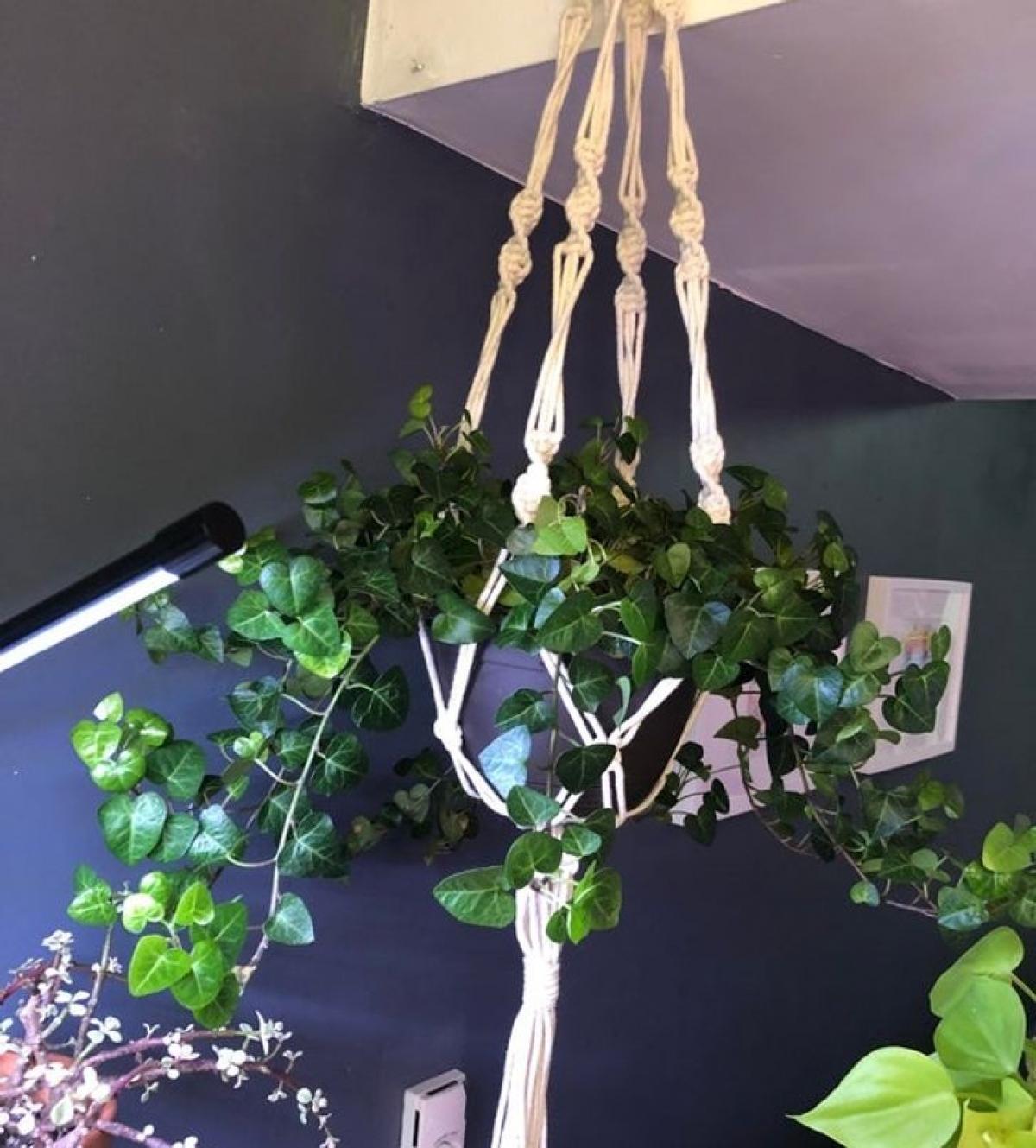 Một số loại cây giúp hút ẩm trong ngôi nhà của bạn