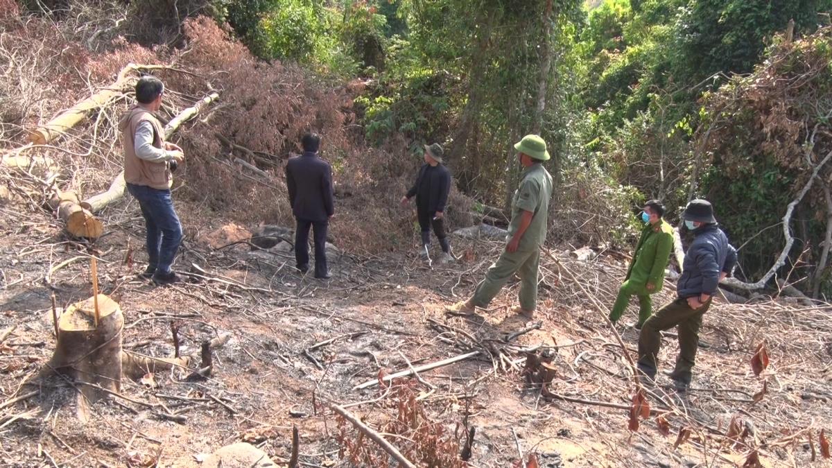Hiện trường vụ phá rừng do ông Cường và ông Quý thực hiện.