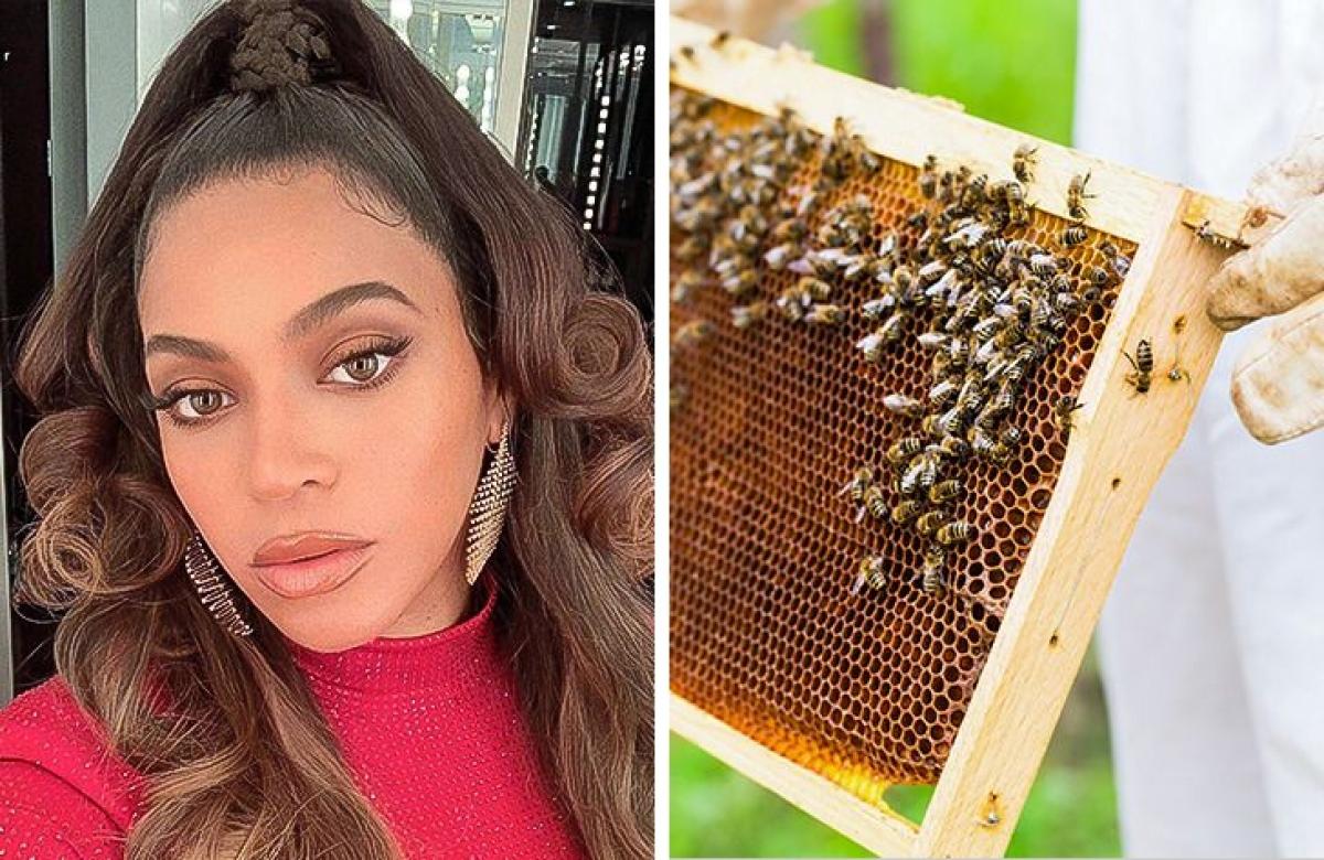 Beyoncé - nuôi ong:Beyoncé bắt đầu nuôi ong để lấy mật giúp cô con gái bị dị ứng nặng. Sau đó, nó đã trở thành một thú vui. Hiện cô có khoảng 80.000 con ong và 2 tổ ong.