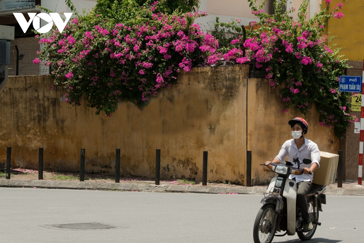 The flowers can help to relieve locals under the current summer heat.