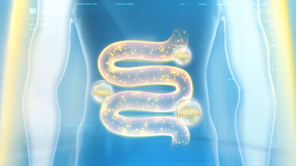Lợi khuẩn (probiotics) trong cơ thể chúng ta là những vi khuẩn - vi sinh vật sống có lợi cho sức khỏe vật chủ.