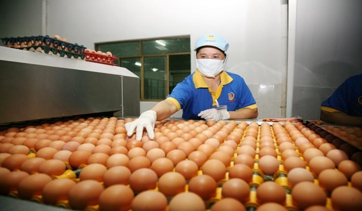 Nhiều đơn vị có thể cung ứng trên 1 triệu quả trứng mỗi ngày.
