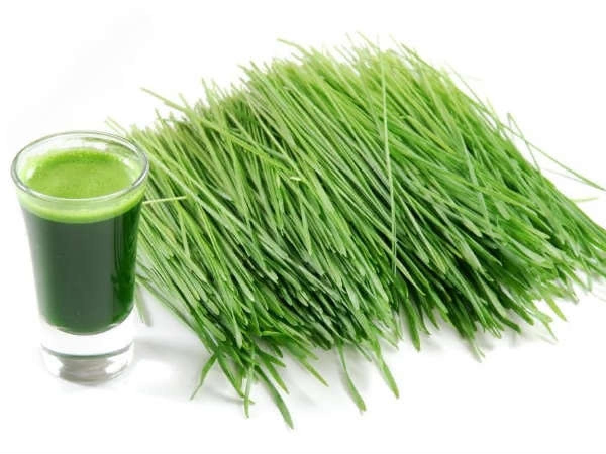 Nước ép cỏ mạch: Cỏ mạch, hay còn gọi là cỏ lúa mì, giúp cân bằng các axit và độc tố trong máu, từ đó loại bỏ nguyên nhân gốc rễ của tình trạng đổ mồ hôi. Bên cạnh đó, nước ép cỏ mạch còn giúp bổ sung vitamin B và một số dưỡng chất khác giúp điều hòa thân nhiệt.