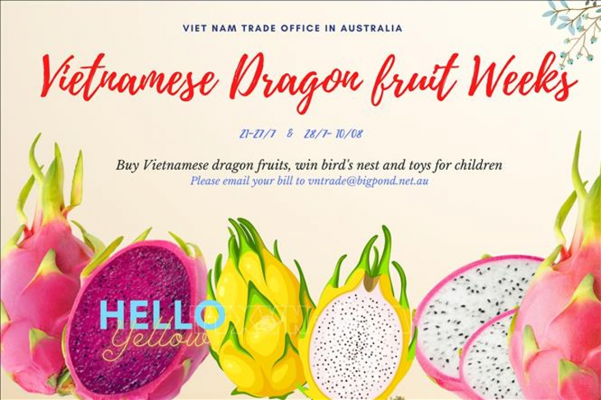The Vietnamese Trade Office in Australia is organizing Vietnamese Dragon Fruit Weeks in Australia to promote Vietnam's advantageous agricultural products in the local market