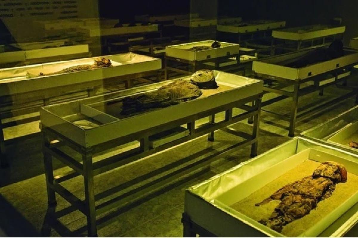 Những xác ướp được khai quật của người Chinchorro. Ảnh: R6nationals.