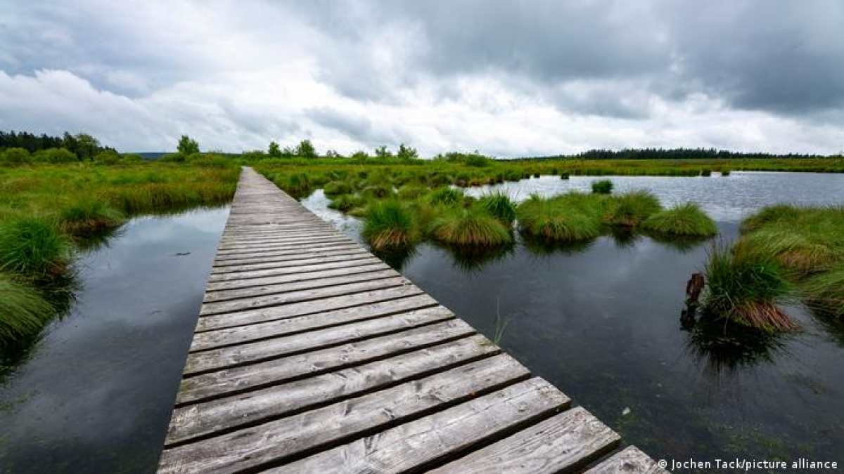 Khu bảo tồn chạy dọc biên giới Bỉ - Đức được mệnh danh là một trong những địa điểm tập trung nhiều sinh vật quý hiếm của châu Âu. Đón lượng mưa nhiều cùng với độ ẩm cao, High Fens là khu bảo tồn có hệ sinh thái rất đặc trưng.