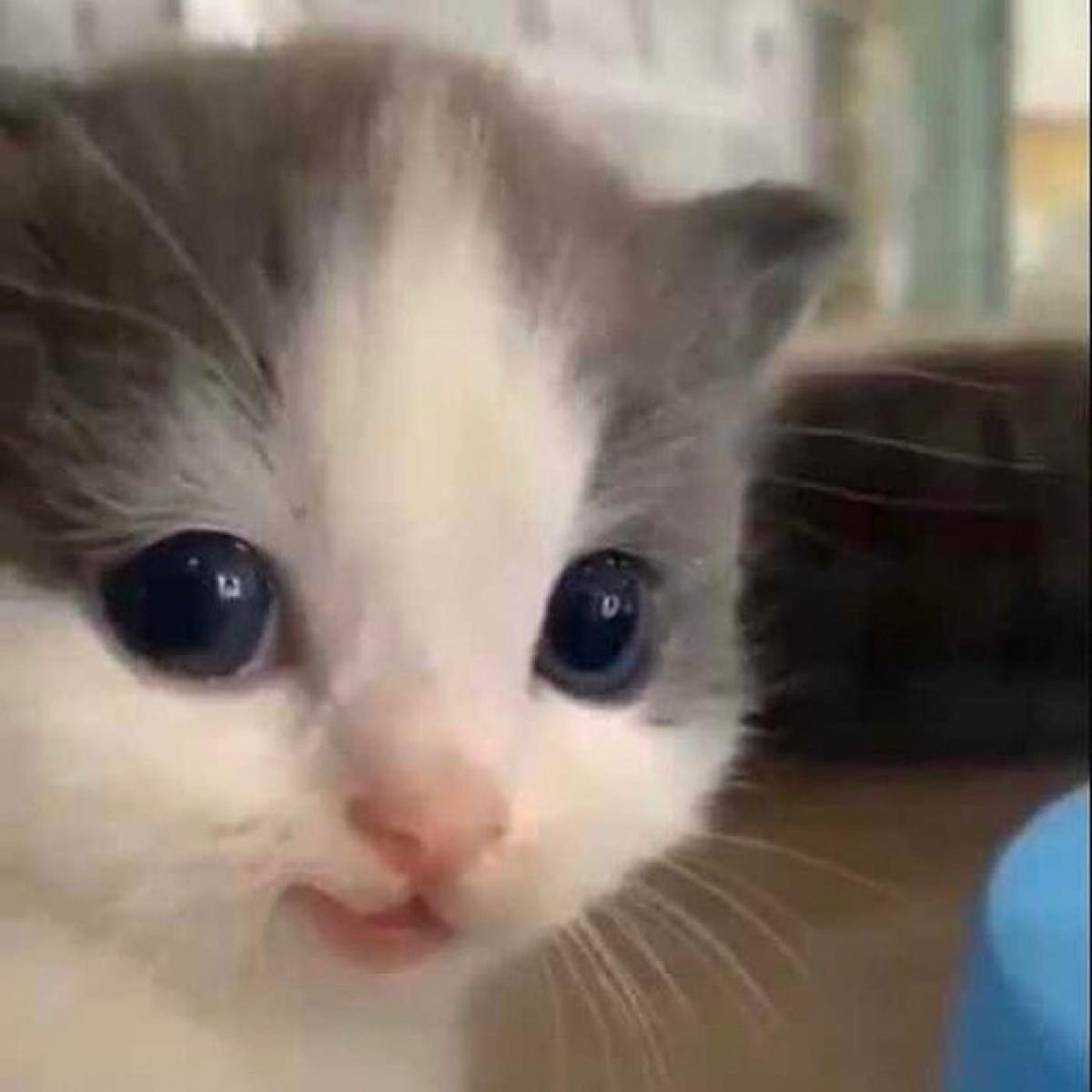 Khuôn mặt xinh xắn với đôi mắt long lanh của một chú mèo con dễ thương.
