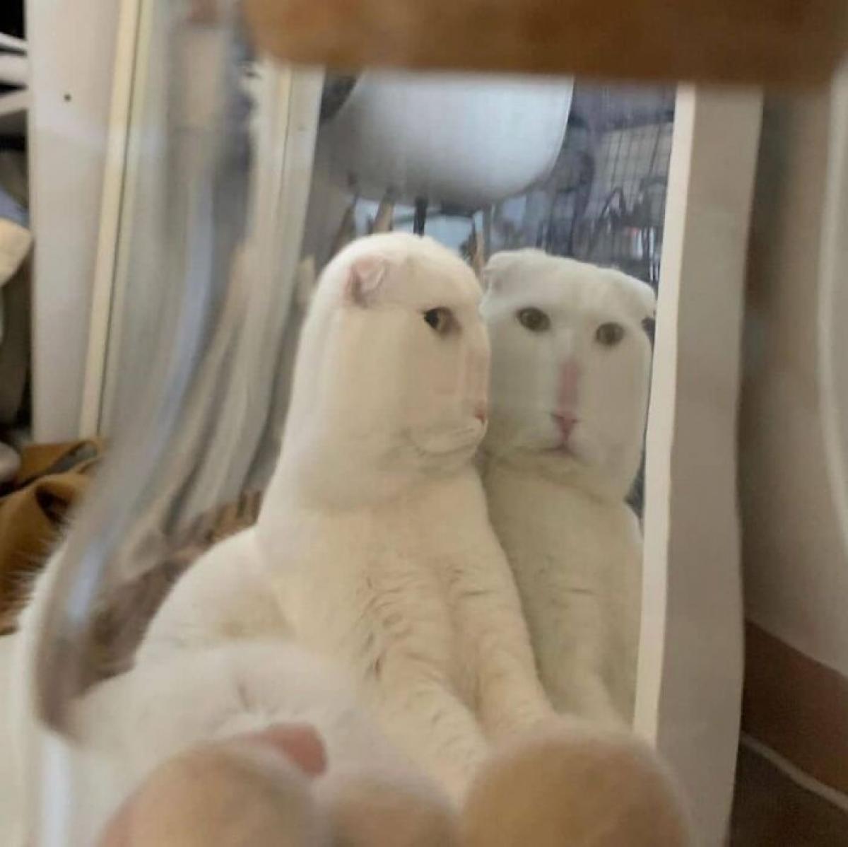 Bật cười trước sự biến dạng của một chú mèo khi nhìn qua chiếc lọ.