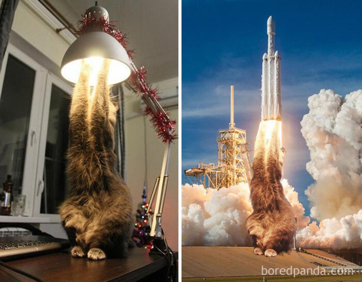 """Bức ảnh khiến bạn không khỏi bật cười bởi """"khả năng"""" đáng kinh ngạc của loài mèo."""