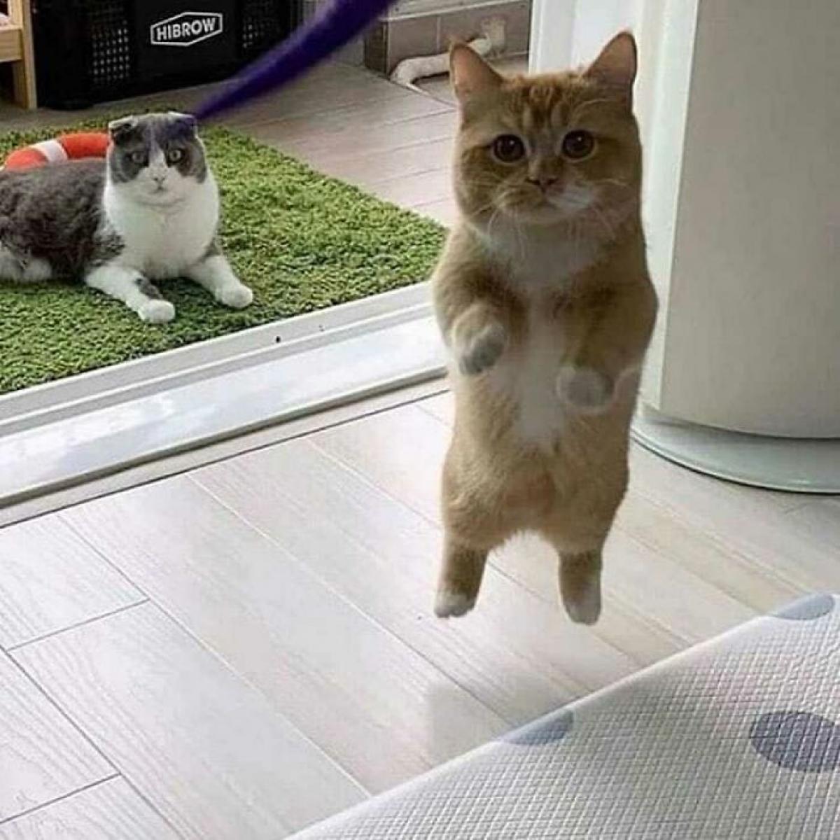 Biểu cảm nũng nịu đáng yêu của một chú mèo con khiến trái tim bạn tan chảy.