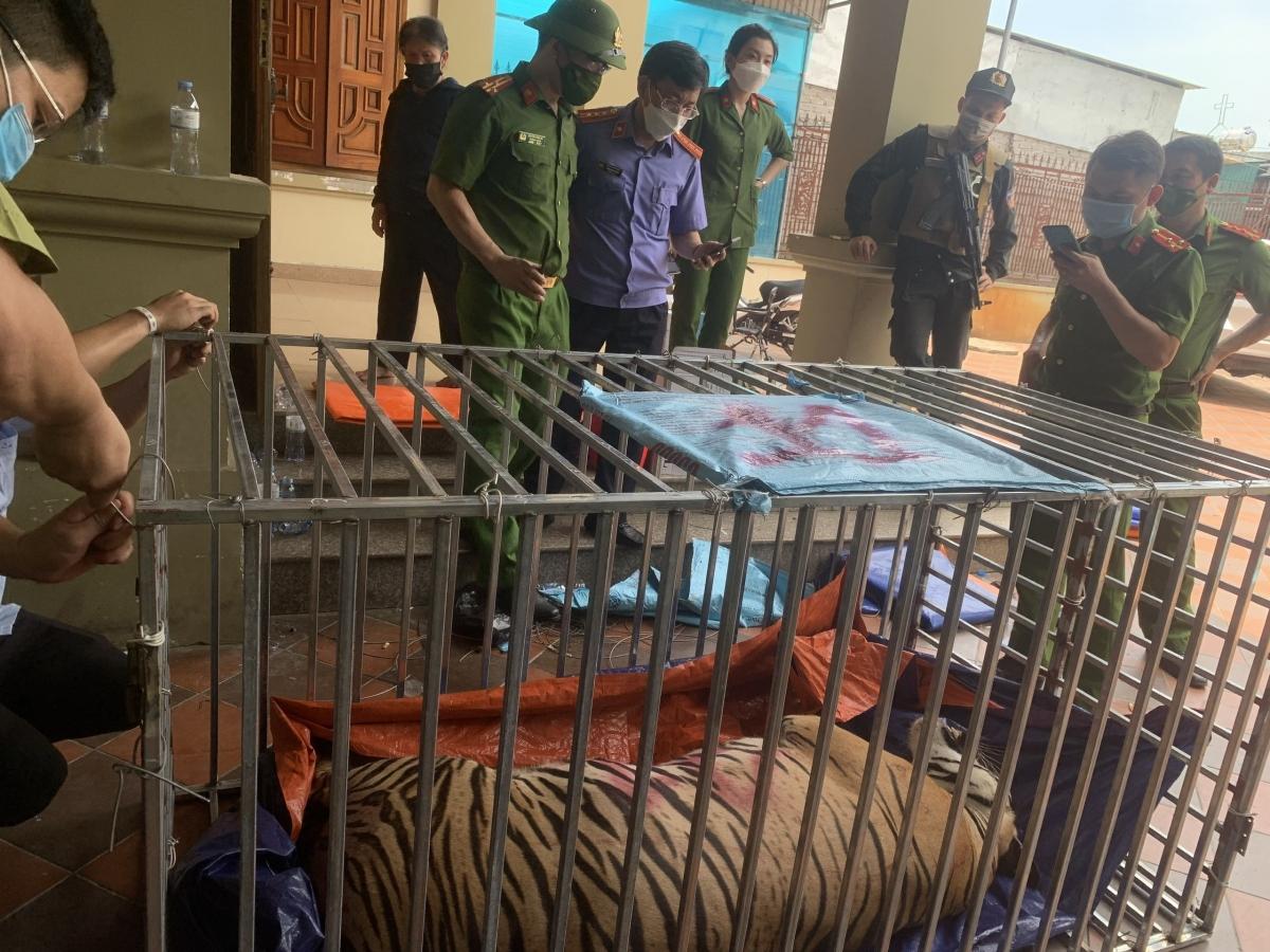 Vụ bắt 17 cá thể hổ nuôi nhốt trái phép: 8 cá thể hổ đã ϲհếт