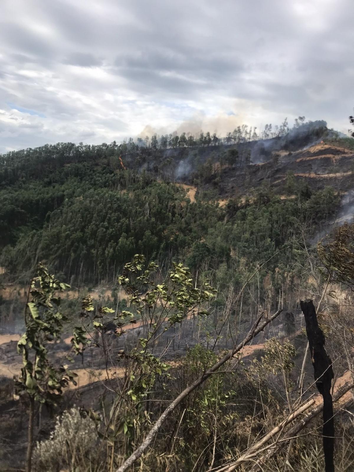 Hiện trường vụ rừng keo bị bốc cháy