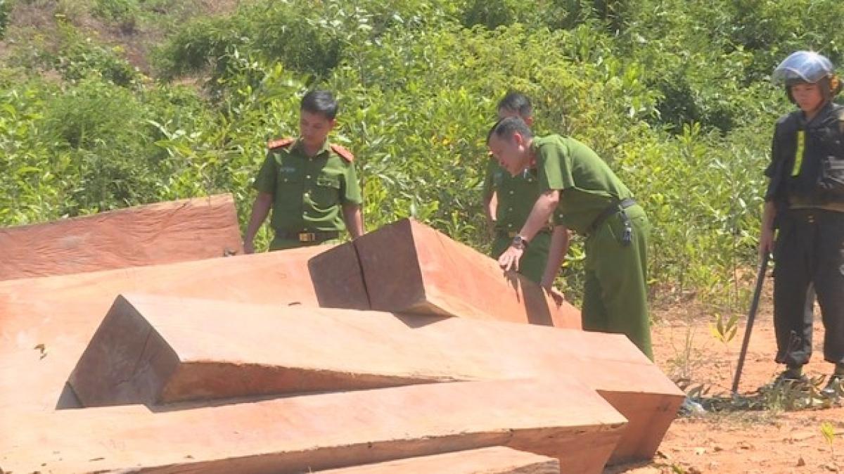 Số gỗ khai thác trái phép được phát hiện tại thời điểm điều tra phá rừng ở Công ty Lâm nghiệp Ea Kar.
