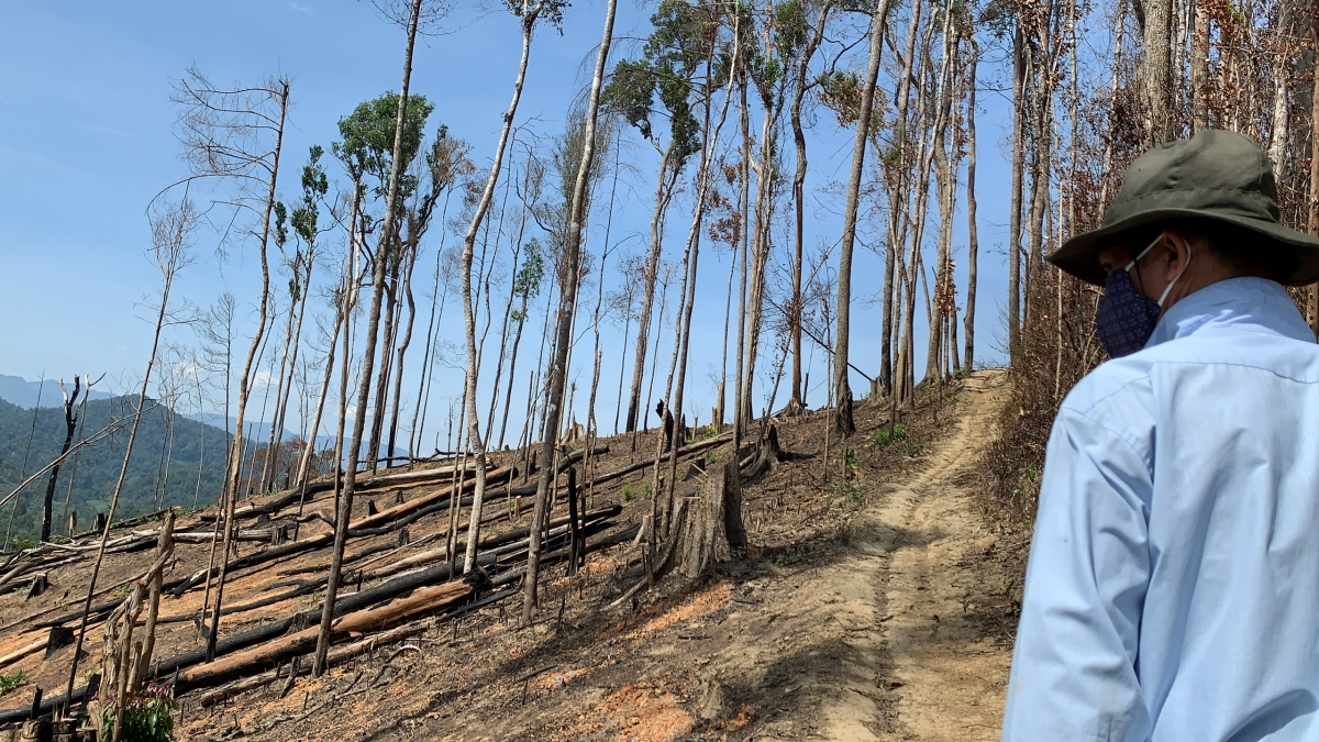 Lãnh đạo Công ty Lâm nghiệp Ea Kar thiếu trách nhiệm, để phá rừng diễn ra trong thời gian dài.