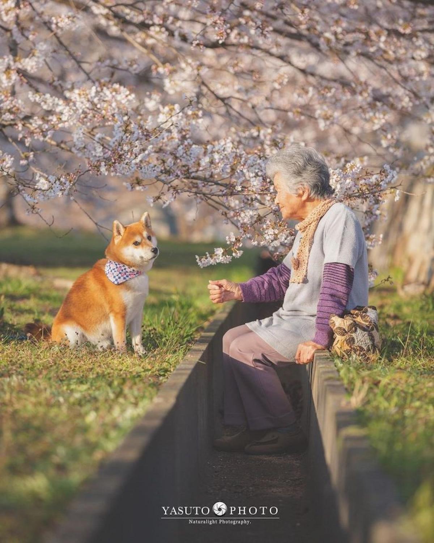 Với bà, chú chó đã giúp khỏa lấp đi những nỗi buồn, sự cô đơn từ ngày chồng bà qua đời.