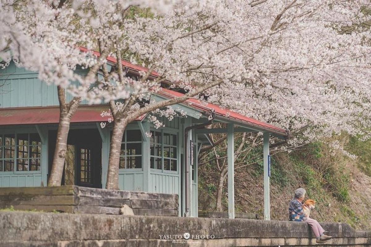 Bộ ảnh cũng làm nổi bật lên vẻ đẹp thiên nhiên muôn vàn sắc màu của Nhật Bản./.