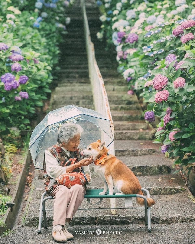 Bộ ảnh tuyệt đẹp của nhiếp ảnh gia Yasuto về người bà và chú chó cưng đã gây xúc động cho rất nhiều người.