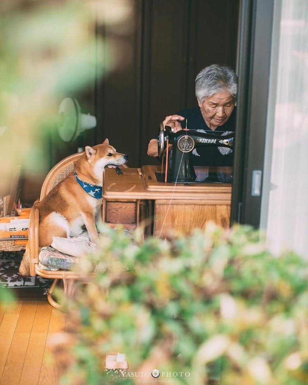 Trong cuộc sống của bà, dù là đi bất cứ đâu, làm bất kỳ việc dù cũng có chú chóFuku thuộc dòng Shiba Inu ở bên cạnh.