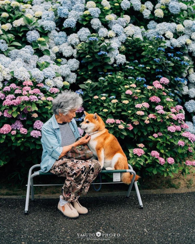 Qua bốn mùa xuân hạ thu đông, dưới góc máy chuyên nghiệp của người cháu, hình ảnh và bà chú chó hiện lên thật đẹp.
