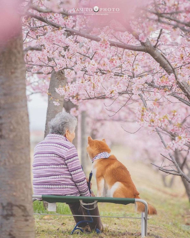 Giữa bà với chú chó của mình có một sự gắn kết kỳ lạ.