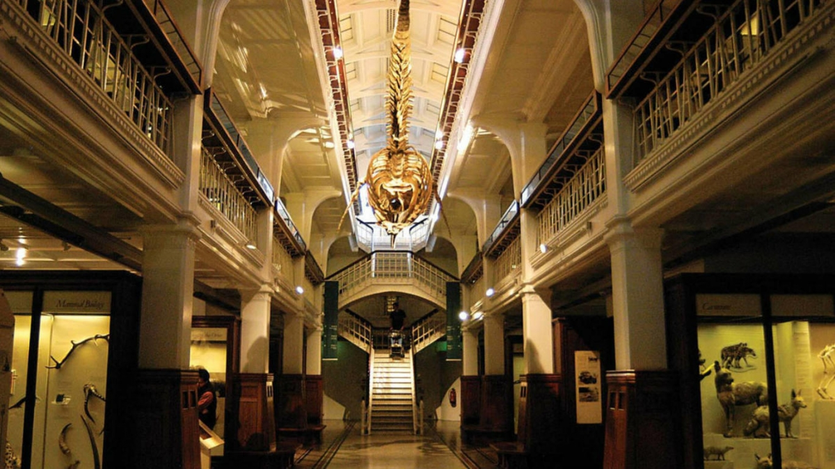 Bảo tàng Manchester. Nguồn: Timeout