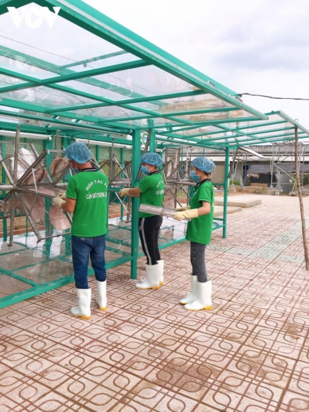 Nhân viên Hợp tác xã Cần Giờ Tương Lai đang sơ chế khô cá dứa