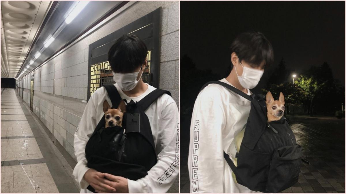 """Một chú chó may mắn khác là Choco, đang sinh sống cùng Lee Min-ho. Trên Instagram, nam diễn viên của """"The King: Eternal Monarch"""" chia sẻ khoảnh khắc đang đi dạo cùng Choco thì gặp cơn giông bất ngờ. Khán giả thích thú với hình ảnh chú chó nhỏ chui vào ba lô với chỉ phần đầu thò ra, được Lee Min-ho giữ an toàn và khô ráo trong khi trú mưa."""