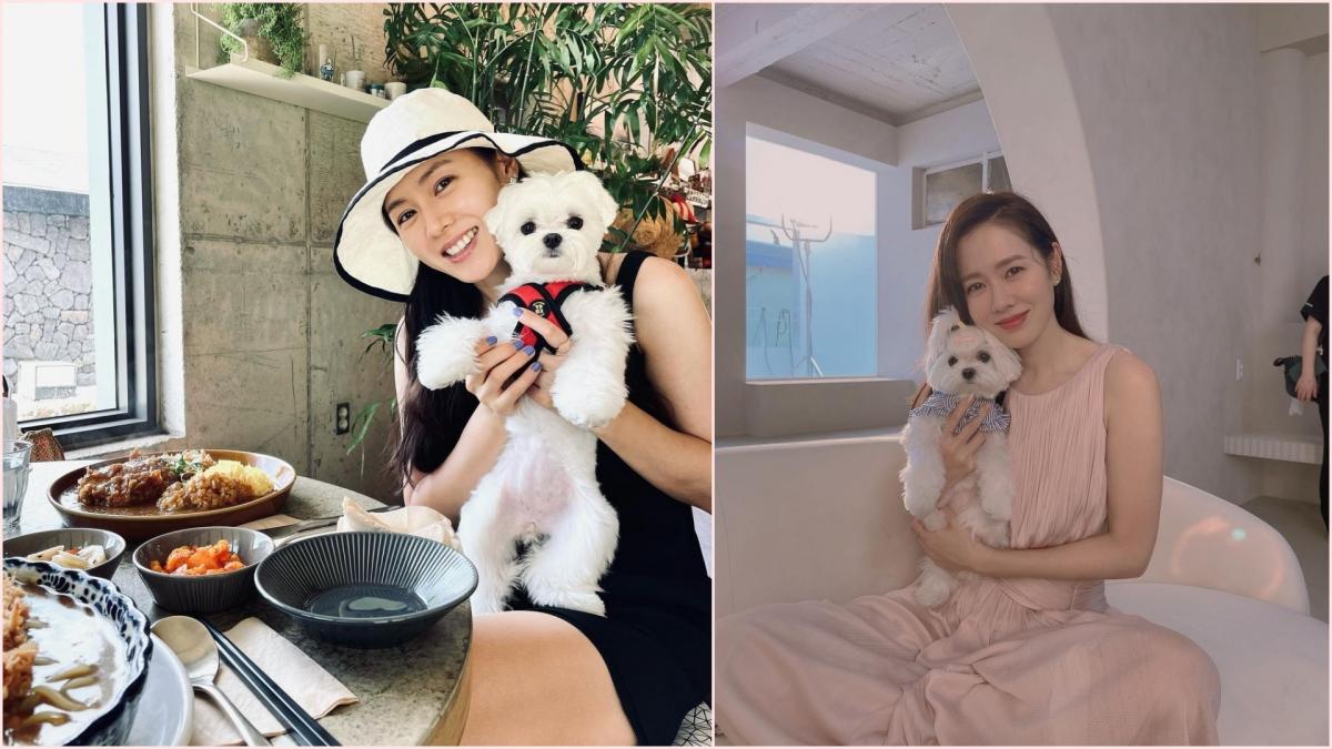 Trong bài đăng mới nhất, Son Ye-jin cùng Kitty gửi lời chào đến hàng triệu người theo dõi trên Instagram và hỏi thăm về kỳ nghỉ Chuseok truyền thống của Hàn Quốc vừa diễn ra. Gần đây, chú chó Kitty cũng đã đi nghỉ cùng cô chủ Son Ye-jin tại đảo Jeju.