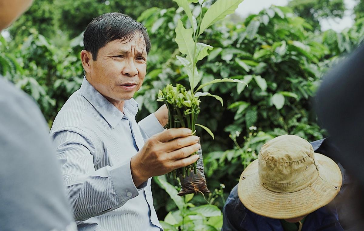 Chuyên gia giới thiệu cách ghép chồi cây cà phê cho du khách. Nguồn: Phạm Hoài Nguyên Anh