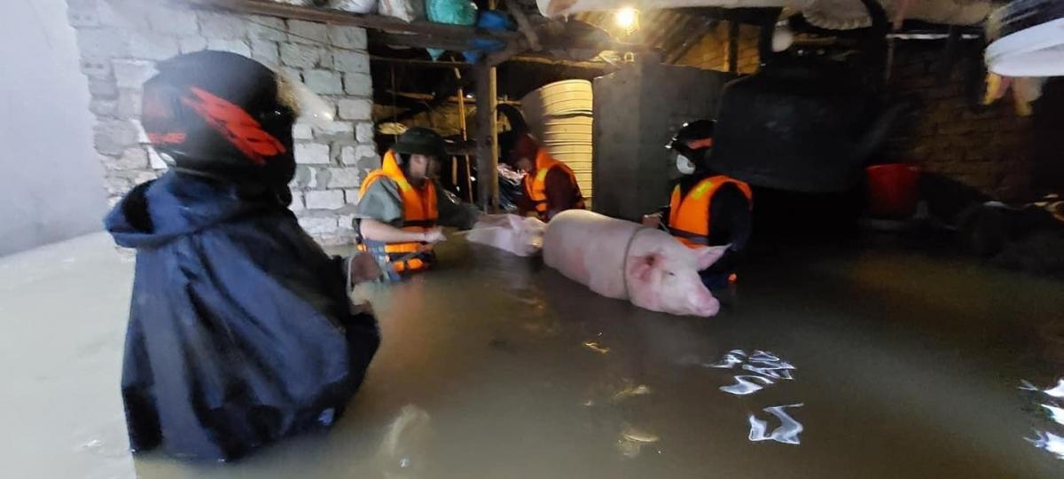 Lực lượng chức năng hỗ trợ người dân di dời vật nuôi tài sản đến nơi an toàn.