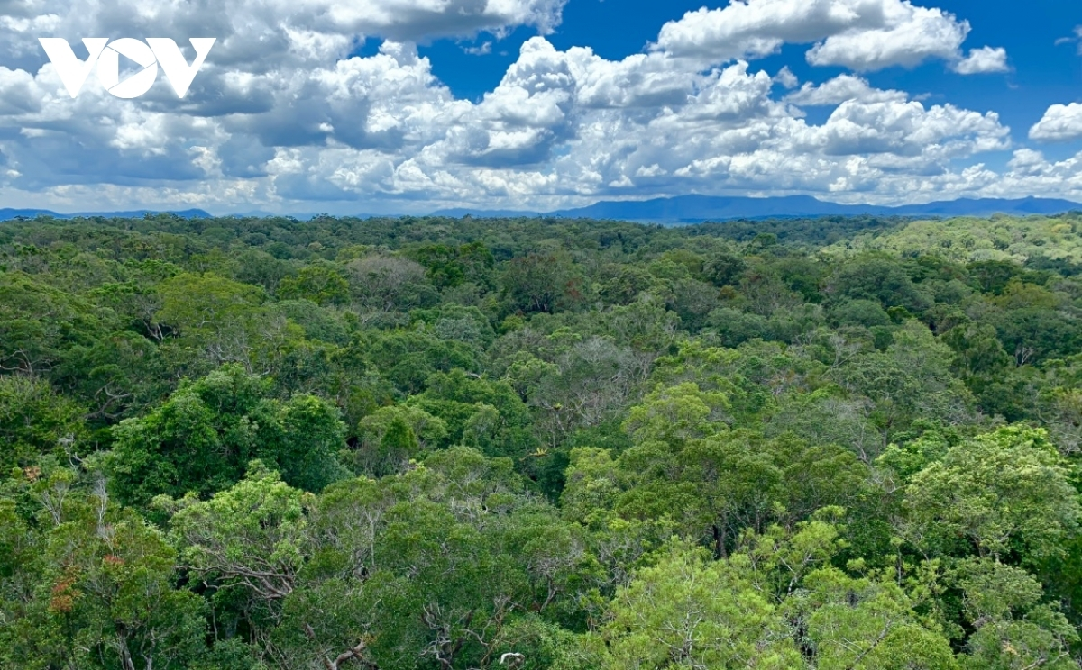 The 413,500-hectare Kon Ha Nung Plateau is home to two nationally-protected sites, Kon Ka Kinh National Park and Kon Chu Rang Nature Reserve, which serve as its core areas.