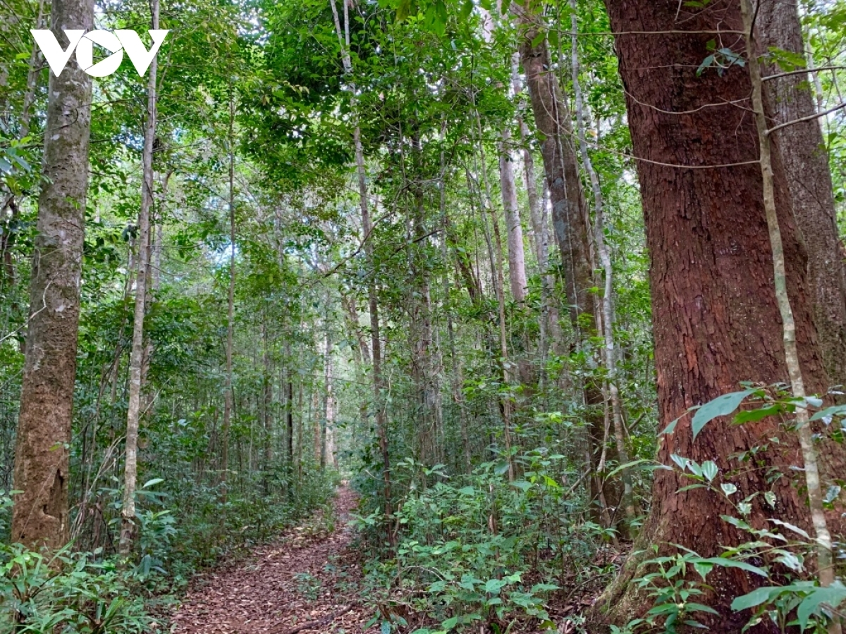 The flora and fauna found in Kon Ha Nung Plateau are both rich and diverse whilst boasting an array of rare species.