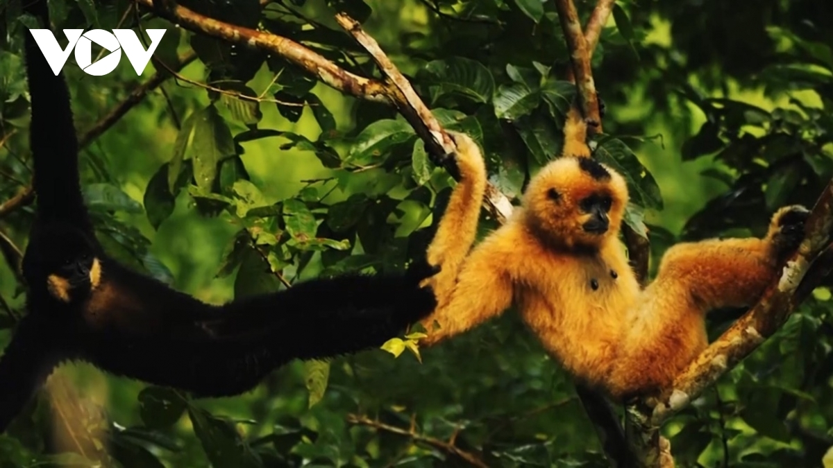 The plateau is home to thousands of animal species, including rare ones such as douc langurs.
