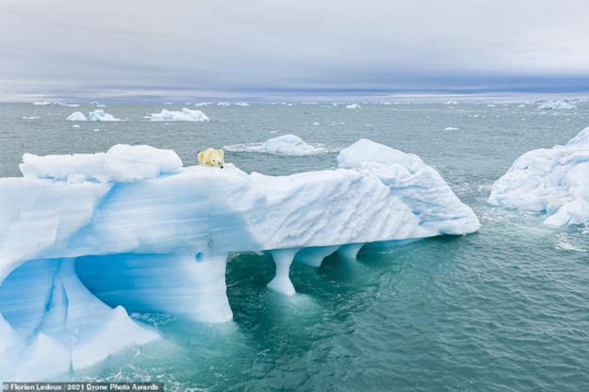Nằm trên một tảng băng trôi, một chú gấu Bắc Cực đang không rời mắt khỏi những con hải cẩu. Bức ảnh đầy ấn tượng này được nhiếp ảnh gia Florian Ledoux chụp ở Svalbard, Na Uy.