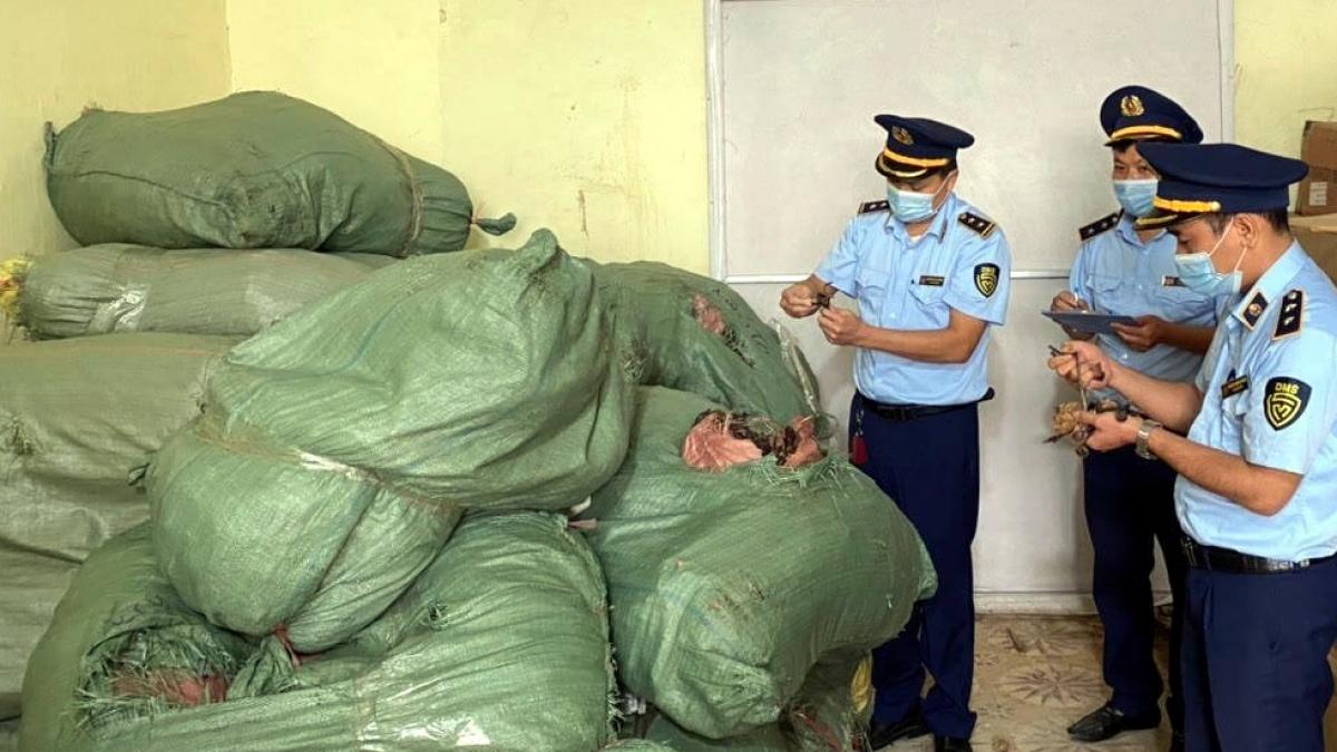 Lực lượng QLTT tỉnh Lạng Sơnlập biên bản tạm giữ toàn bộ số nấm trúc và nấm trường thọ.