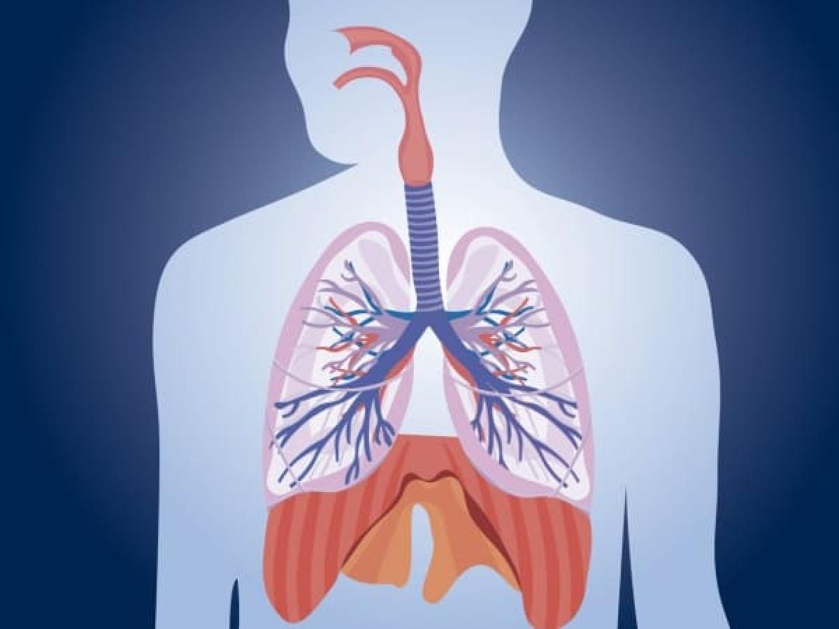 Viêm đường hô hấp: Nguy cơ viêm đường hô hấp vào mùa mưa tăng cao do mưa và lũ lụt. Các dạng viêm đường hô hấp như hen, viêm xoang, dị ứng hay viêm phổi là các bệnh thường gặp vào mùa mưa./.