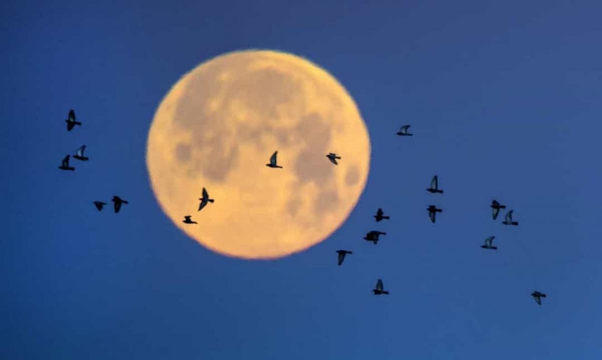 """Mặt Trăng không phải là một vật thể nguyên thủy. Theo Cơ quan Hàng không và Vũ trụ Mỹ (NASA), Mặt Trăng là """"một hành tinh đã tiến hóa"""", nó có sự phân vùng bên trong tương tự như Trái Đất, với một lớp vỏ dày và một phần chất lỏng ở sâu bên trong."""