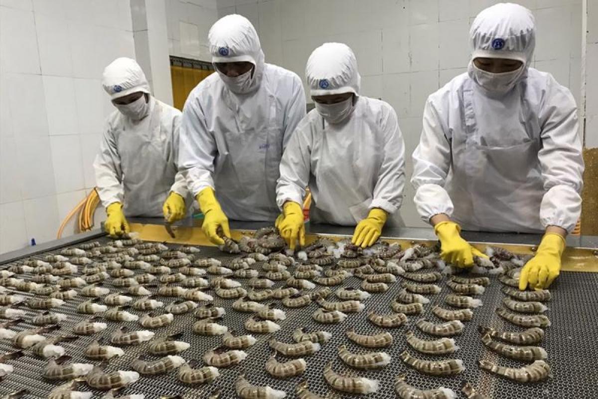 Thứ trưởng Phùng Đức Tiến: Cần sớm hoạt động trở lại ngành tôm