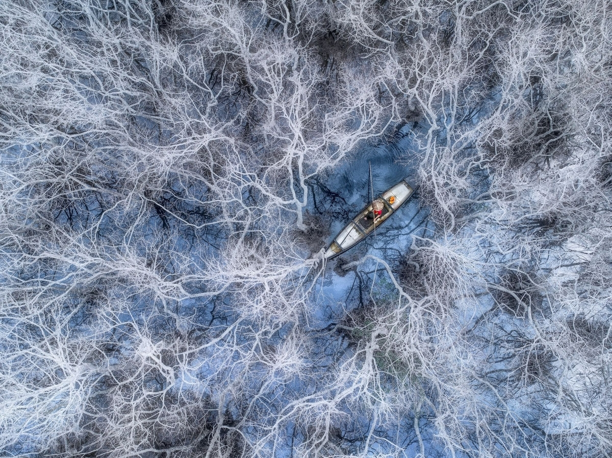 """Trung's photo themed """"Fishing in mangrove forest"""" depicts a fisherman working in a mangrove forest located in Hue province's Tam Giang lagoon.An awards ceremony is scheduled to take place at Siena Awards Festival in Siena, Italy, in October."""