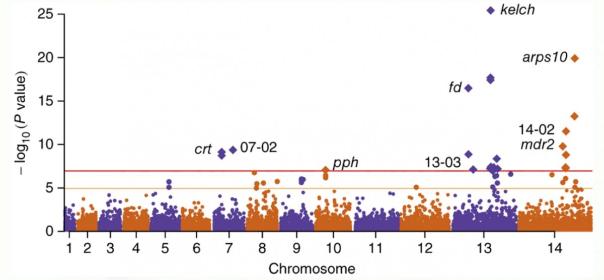 Biểu đồ về tình trạng kháng thuốc Artemisinin (Nguồn:trúc di truyền của Plasmodium falciparum kháng artemisinin, Nature Genetics 47)