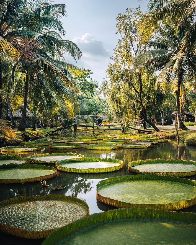 Chuyến thăm Việt Nam vào năm 2019 là một trong những hành trình mà Steven D'Avignon yêu thích nhất. Anh cho biết Việt Nam có rất nhiều cảnh đẹp trên khắp đất nước, con người cũng rất tuyệt vời. Bức ảnh này được anh chụp tại khu du lịch Bình Quới (TP.HCM).