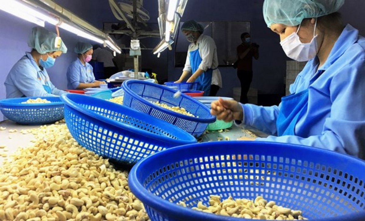 Workers at a cashew nut processing plants in Vietnam.